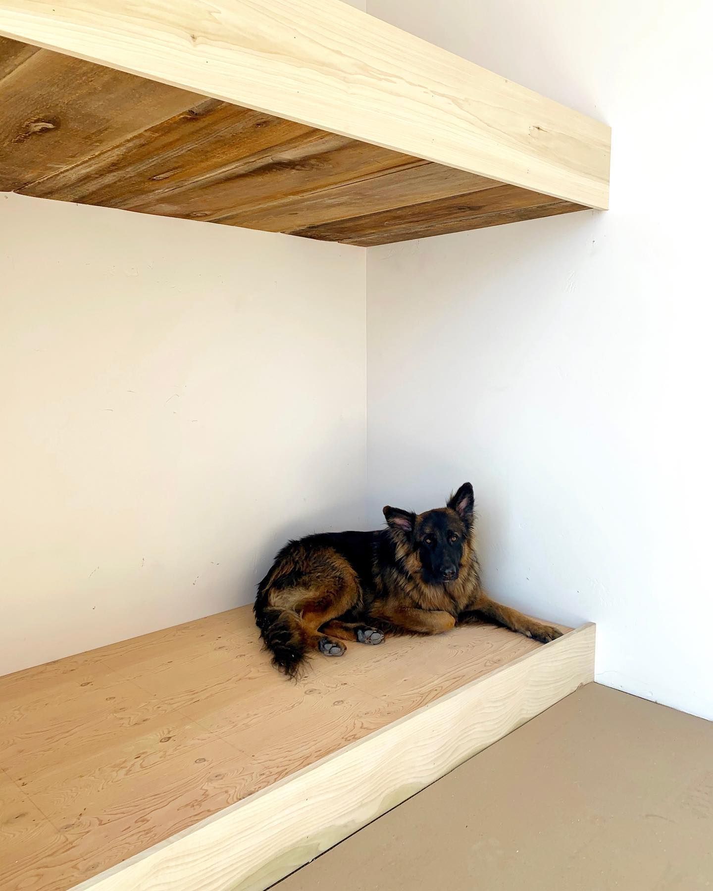Rosco...quality control. He approves of the bunk beds whitefish custom home builder
