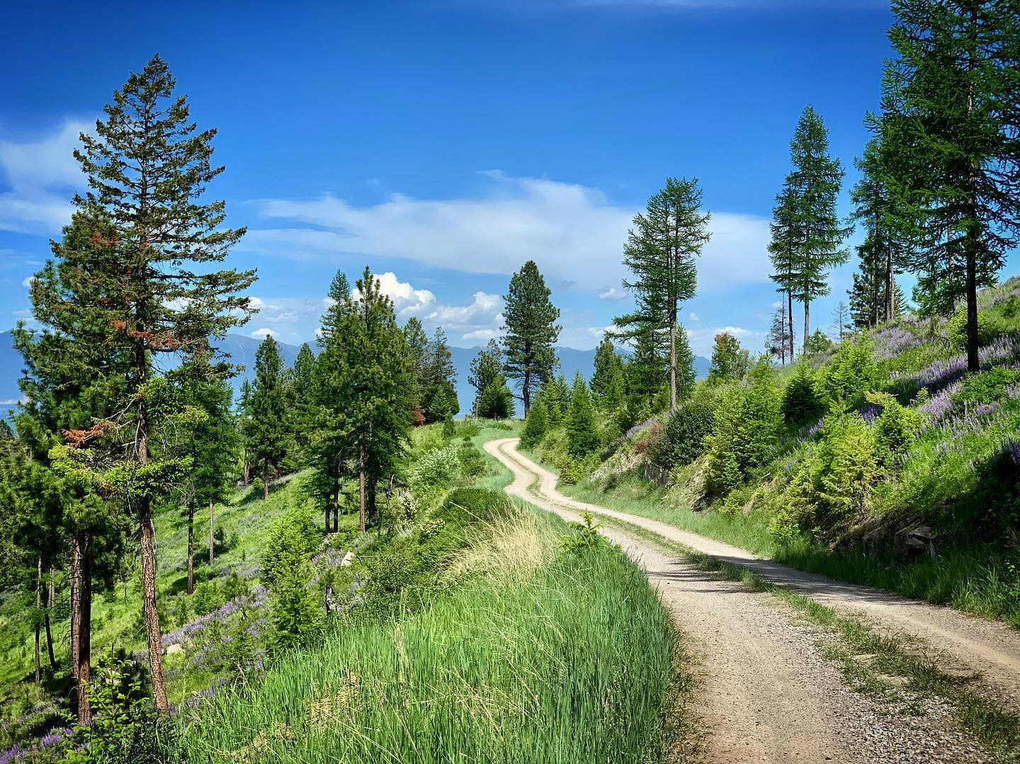 Quite the jobsite road...from right here you feel like you are on top of the Flathead Valley whitefish custom home builder
